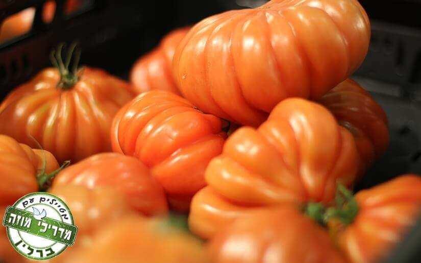 ירקות טריים ישר מהחקלאי